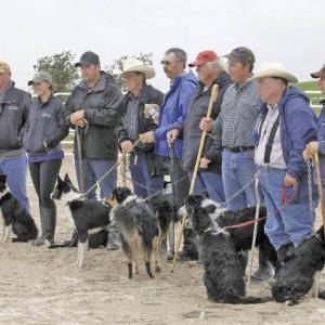 sv stock dogs 24_svr_c_opt.jpeg