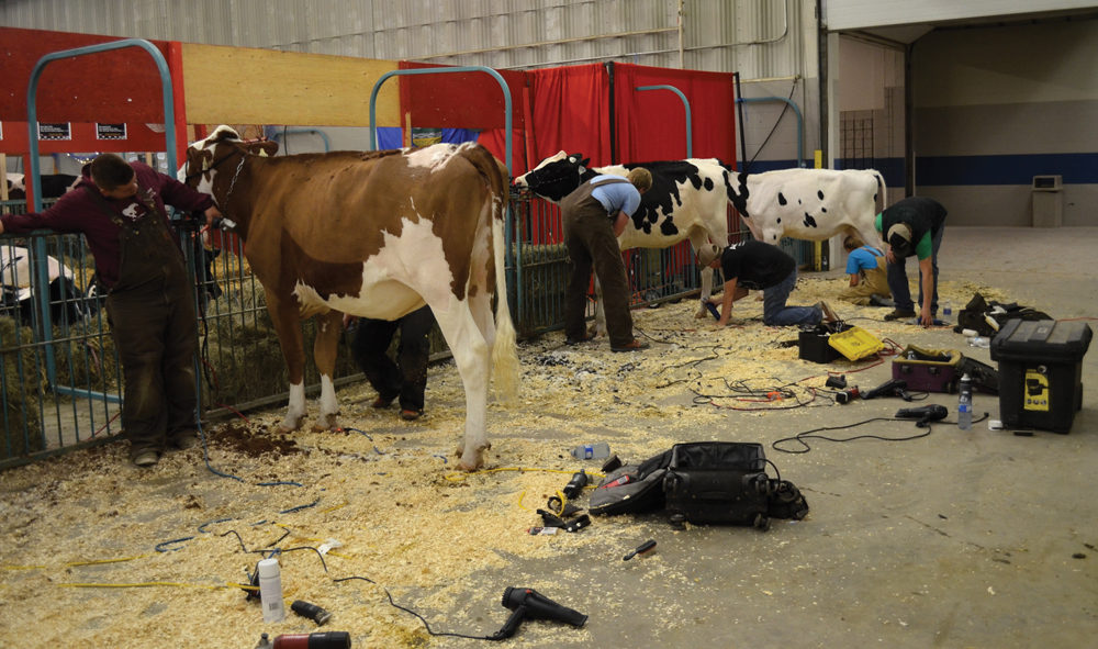 The Western Canadian Classic brings together 100 youth for a week of stall, showmanship and conformation competitions.