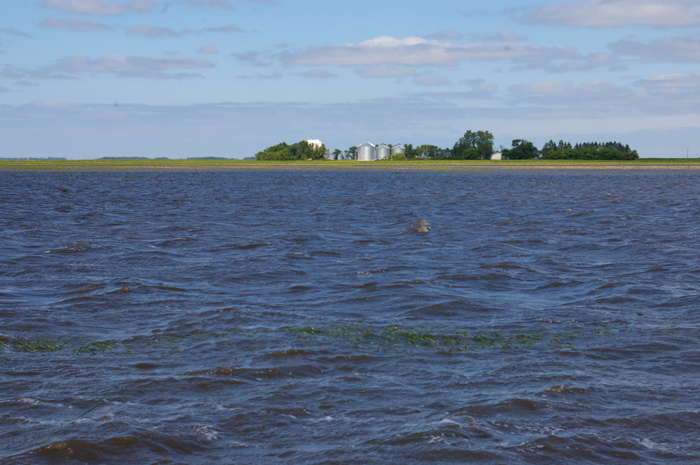 severely flooded field in Manitoba