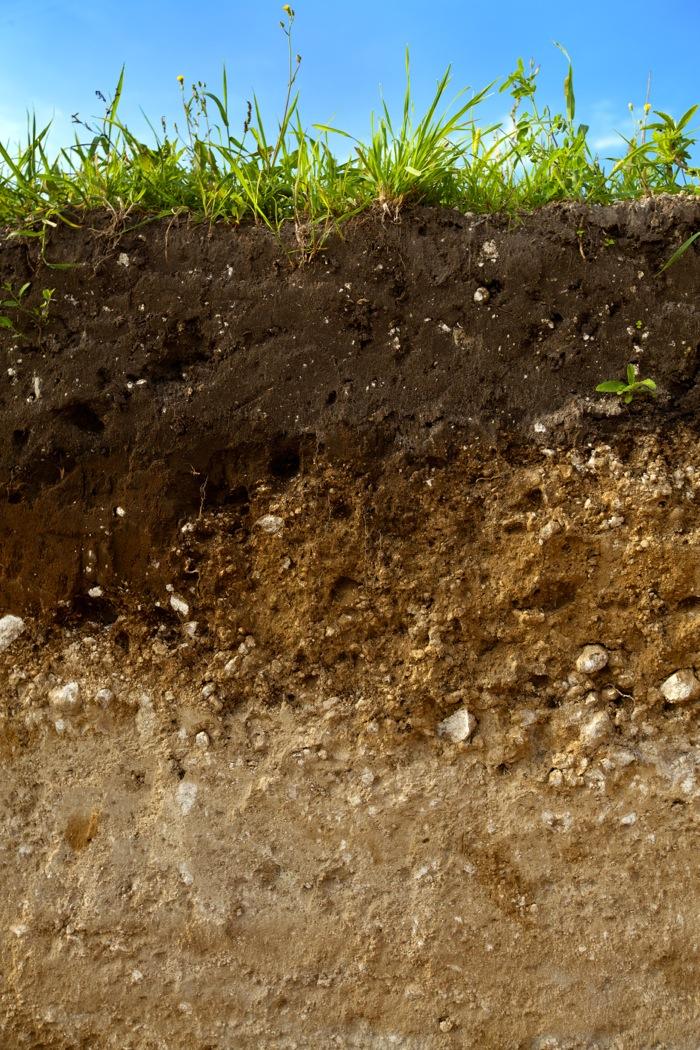 soil profile of farmland