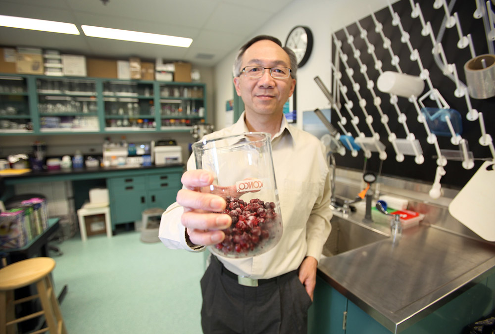 Chris Siow, a research scientist at the Canadian Centre for Agri-Food Research in Health and Medicine is studying the health benefits of lingonberries.