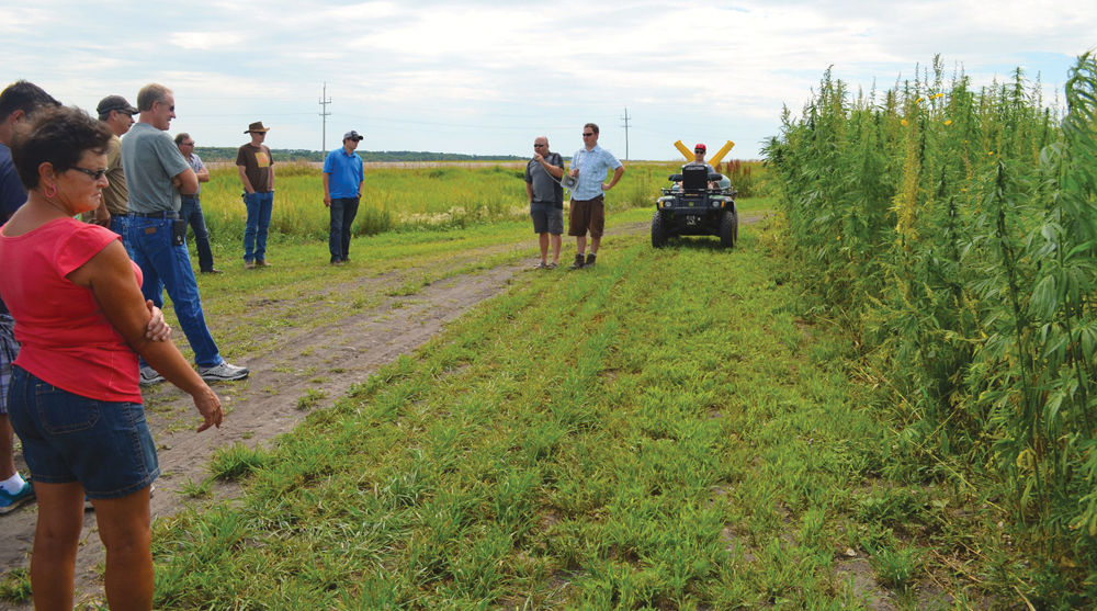 Jeffery Kostuik, diversification specialist with Parkland Crop Diversification Foundation, shed some light on industrial hemp production at the Westman Agriculture Diversification Organization field day in Melita on July 22.