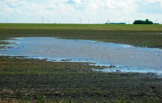 flooded field drainage - FIW