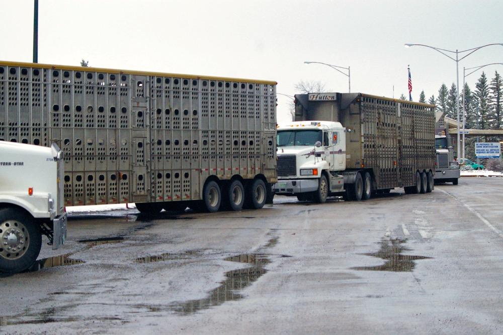 border lineup (trucks) - Glen Nicoll 051110.12