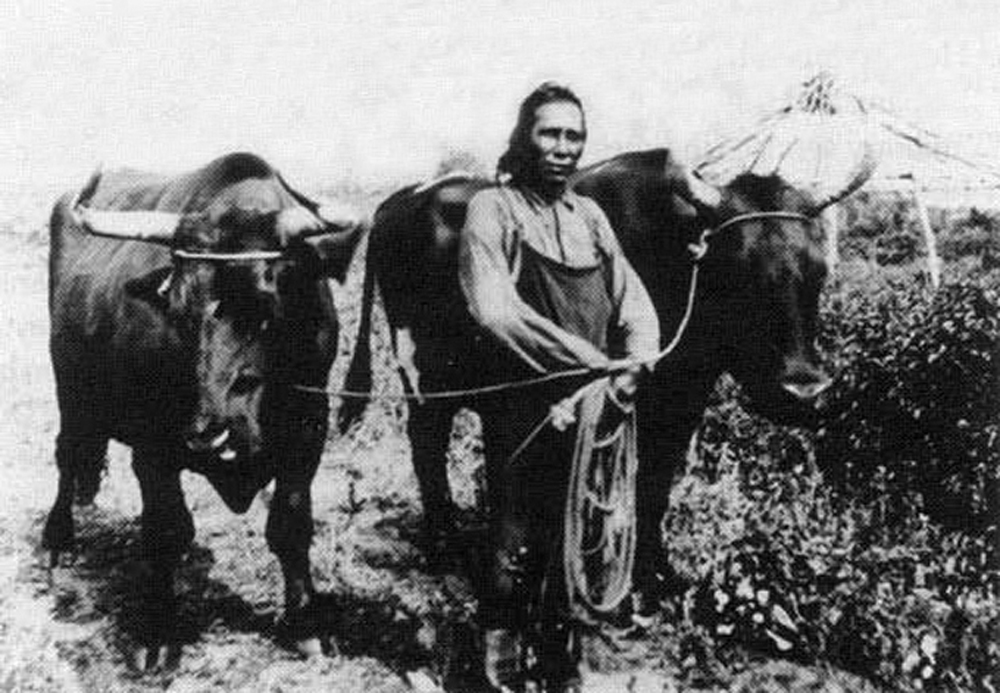 Aboriginal Manitoba farmer with oxen, circa 1900.