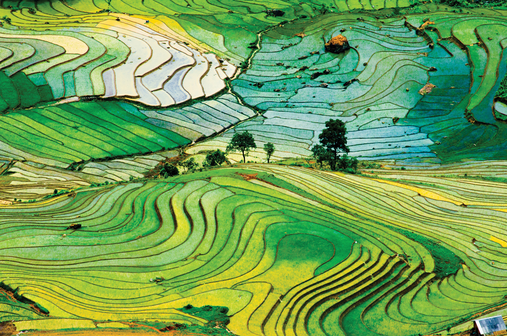 Humans have been farming rice far longer than originally thought.