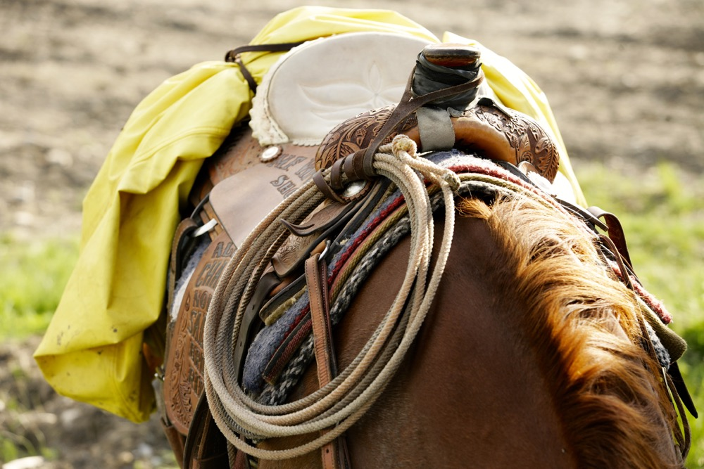 horse and saddle