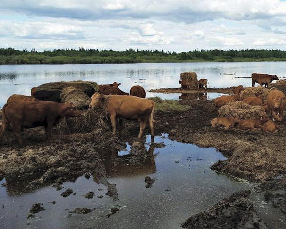 High water has inundated Tim Berscheid's ranch, near The Pas.