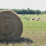 Leaving hay bales in the field has quite a few hidden costs.