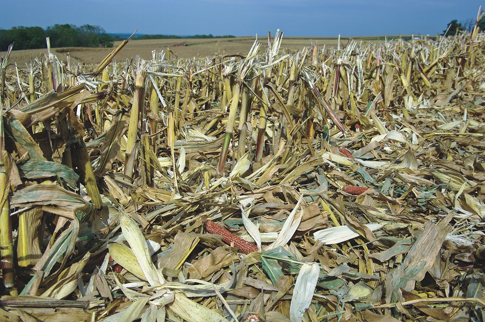 New research may be paving the way to more efficiently converting biomass like cornstalks into biofuels.