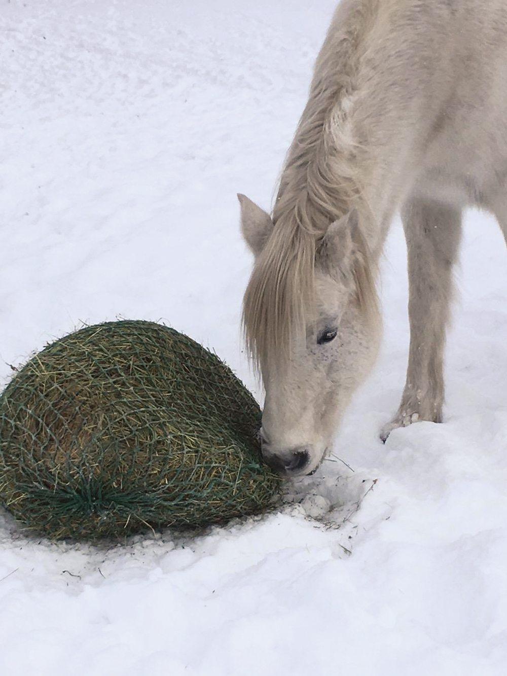 Slow feeders come in all shapes and sizes but all are designed to even out a horse's food consumption.