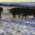 Beef and Forage Days runs this week from Jan. 29 to Feb. 2.