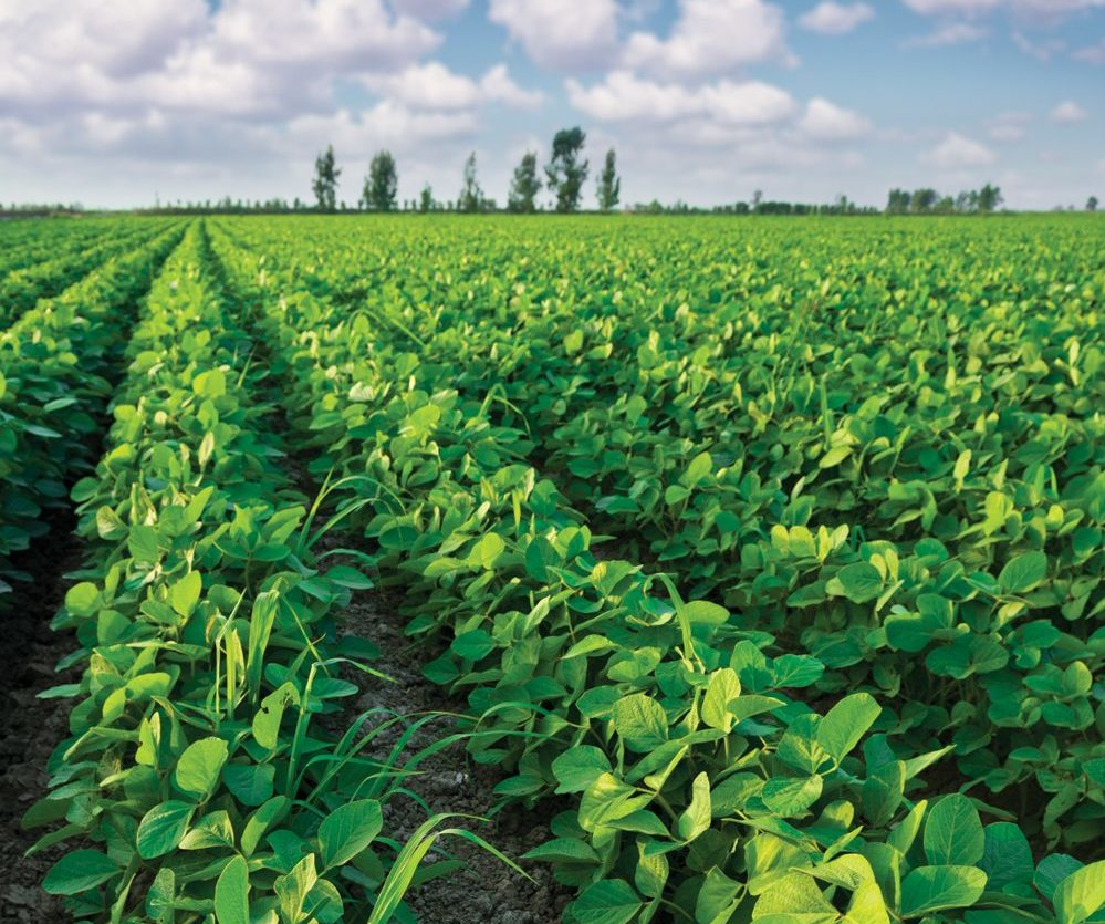 Manitoba's soybean growers are facing protein-related discounts from some buyers.