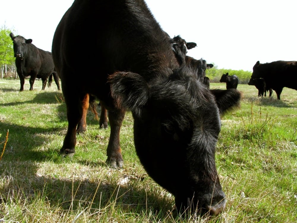 In a year where feed may be short, extra culls need to be considered.