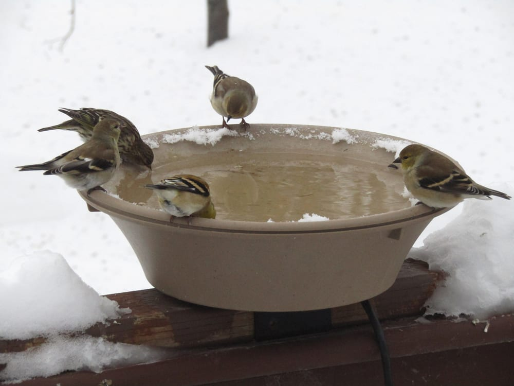 A heated bird bath will provide a source of water all winter.
