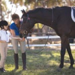 All aspects of riding will be taught at the 4-H club.