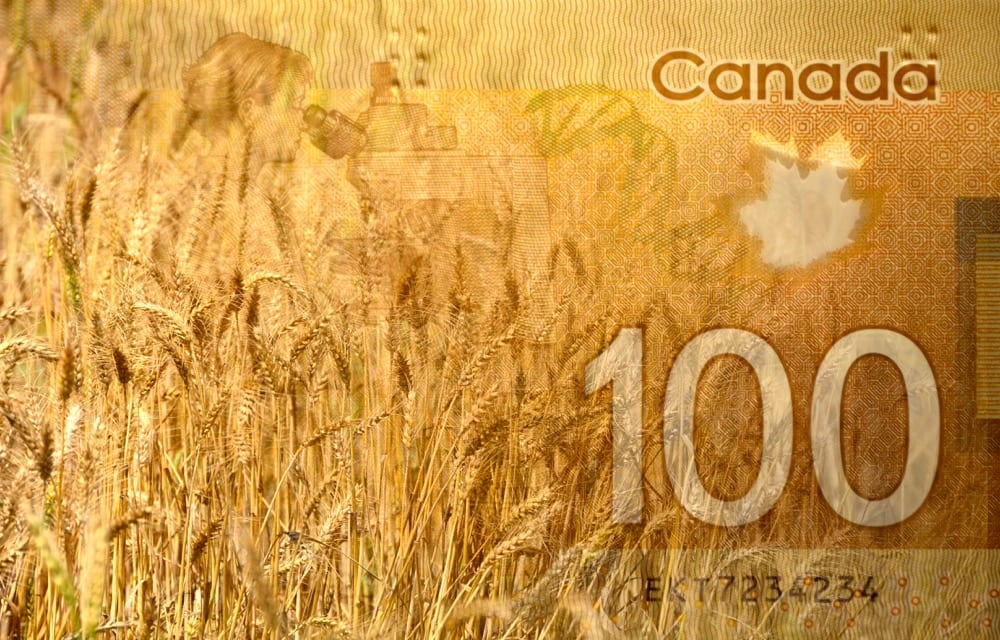 wheat and one-hundred dollar banknote