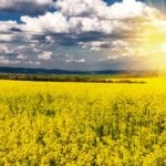 Market access and boosting canola production remain top priorities, says the Canola Council of Canada