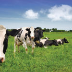 New feed sources and better farming practices have resulted in Canadian