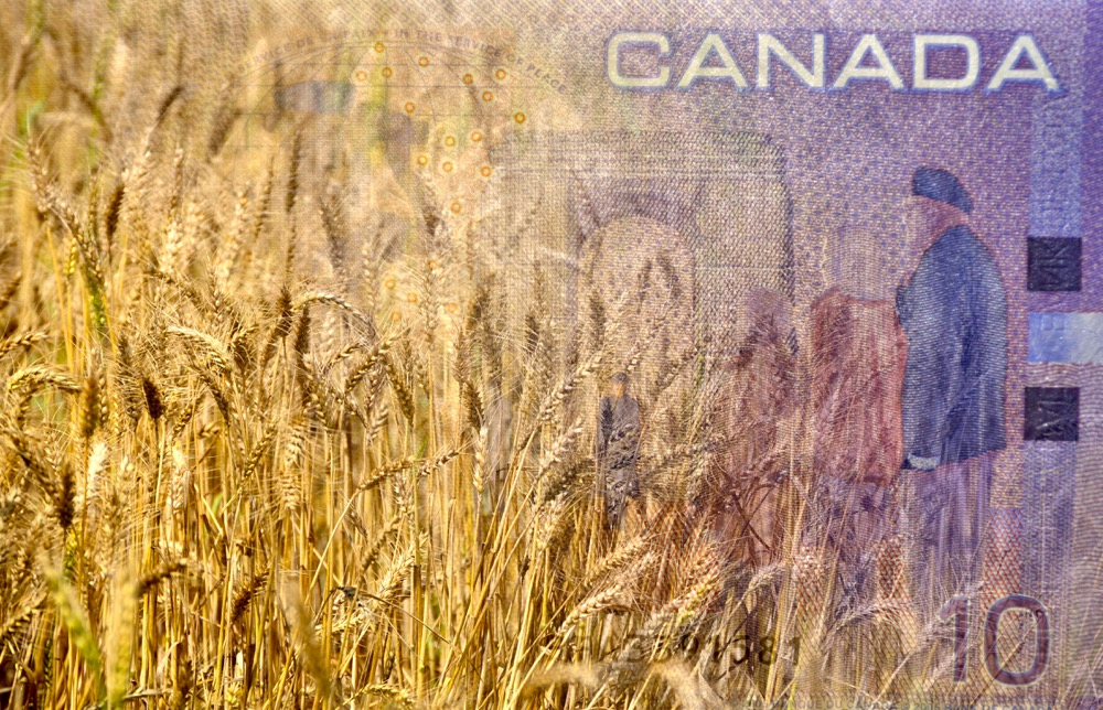 Wheat and Canadian Money or dollar or currency in double exposure shot, concept for earnings or spend in Agriculture