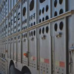 Beef producers say new transportation regulations may actually harm animal welfare.