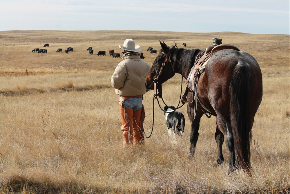 Having contact with your cattle — whether they're on pasture or in a feedlot — can pay significant dividends.