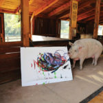 Pigcasso, a rescued pig, paints on a canvas at the Farm Sanctuary in Franschhoek, outside Cape Town, South Africa February 21, 2019.