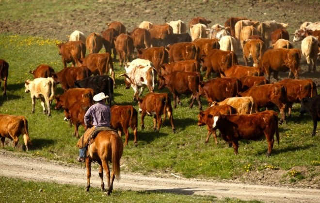 About 4.7 million pounds of beef qualified for a Canadian Roundtable for Sustainable Beef claim in 2018.