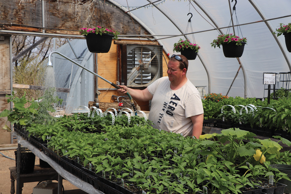 Travis Walker waters vegetable bedding plants in his greenhouse
