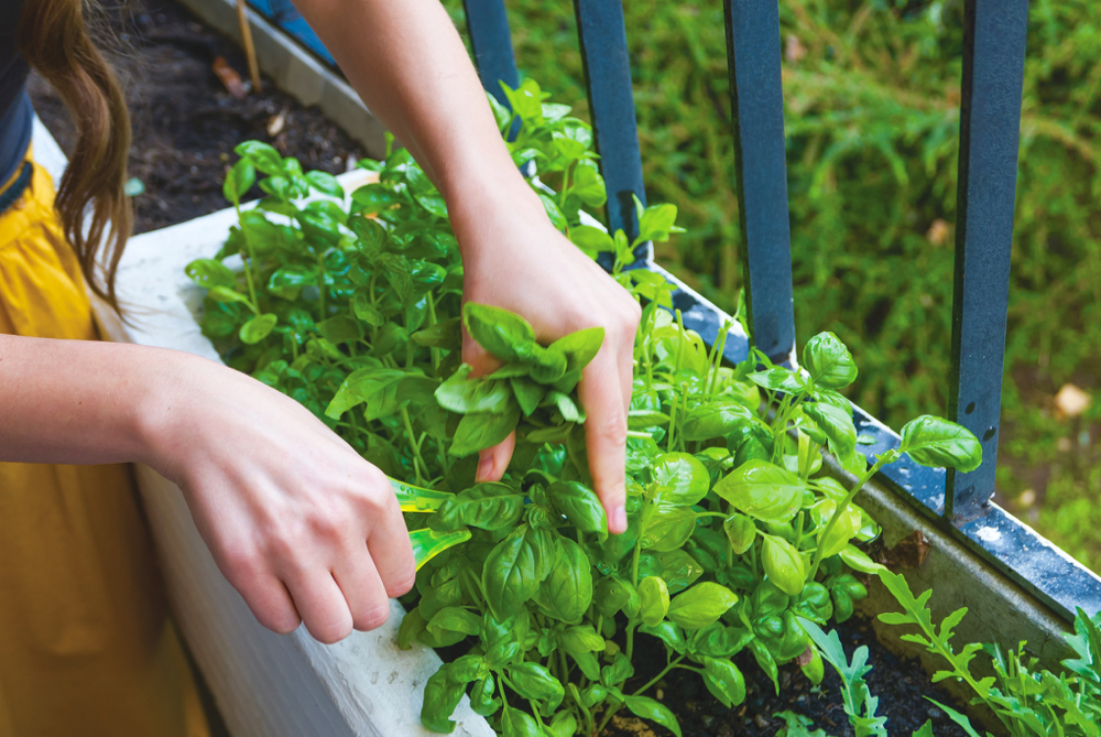 Fresh herbs from the garden are a taste sensation.