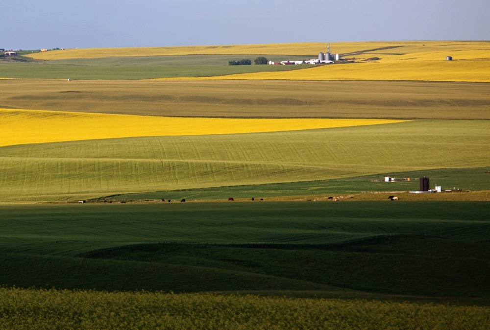 Rolling prairie landscape. Central Alberta, Canada.