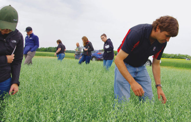 Attendees at the Crop Diagnostic School earlier in July pore over an oat crop at the Ian N. Morrisson Research Farm in Carman.