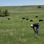A producer samples standing forage as part of an extensionmineral-testing program.