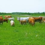 Regenerative agriculture uses grazing to improve forage yield, soil organic matter and even habitat in some cases.