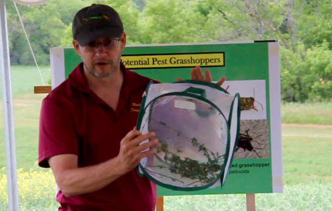 VIDEO: Know your grasshopper stages before deciding to spray