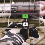 Farmers can see cow data, like this, within their line of vision using augmented reality glasses.