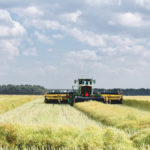 New shatter-resistant canola varieties may hold the key to parking your swather.