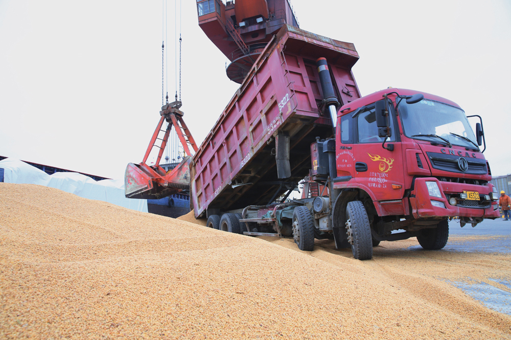A truck unloads soybeans imported from Brazil on the quay of a port in Nantong city, east China's Jiangsu province.