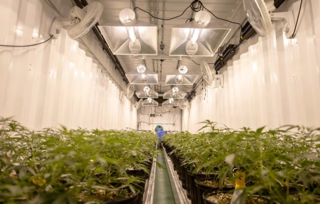 File photo of medical cannabis in production. (FatCamera/iStock/Getty Images)