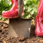 Five tips for eco-friendly gardening
