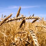Ukraine's wheat sales close to reaching 2019-20 export quota limit