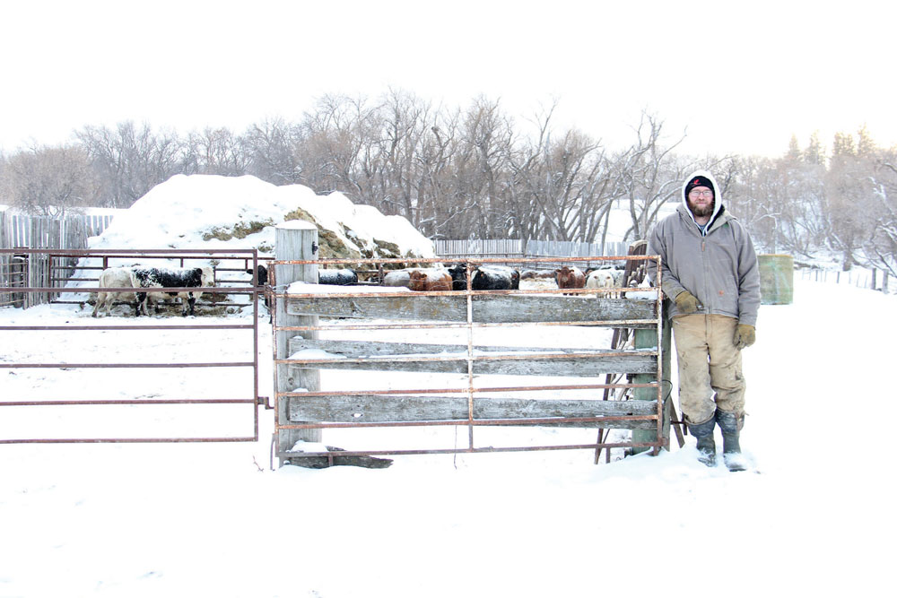 Anthony Wilcox, along with his dad and grandpa, raise purebred Simmental and Speckle Park cattle near Treherne.