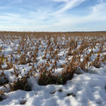 Many Manitoba farmers felt the pain of a hard season.
