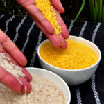 Golden Rice grain compared to white rice grain in screenhouse of Golden Rice plants.