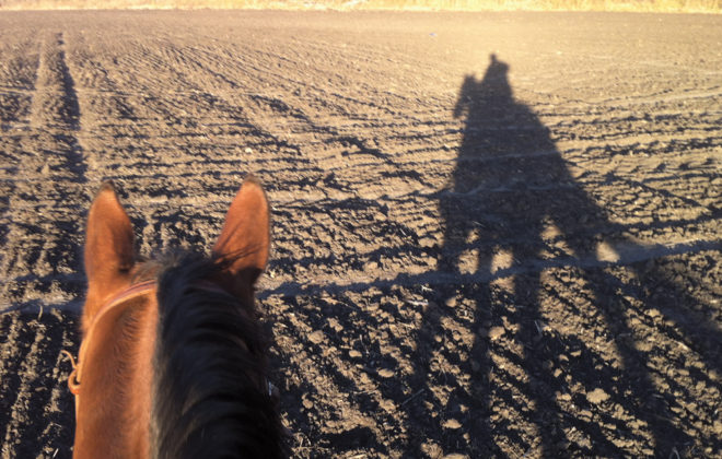 The right combination of horse and rider is very important to the health of the horse.