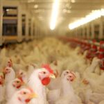 Poultry farmers' groups have said they support the private member's bill.