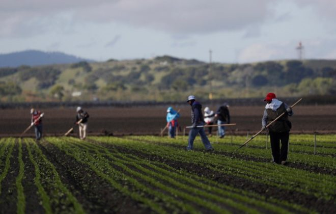 Migrant workers clean fields in California's Salinas Valley on March 30, 2020. (Photo: Reuters/Shannon Stapleton)