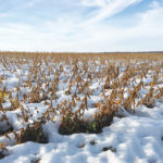This field of soybeans near Altamont was snow covered Oct. 17, 2019, but was eventually harvested last fall. However, more than 400,000 acres of annual insured crops weren't harvested as of Nov. 20, 2019.