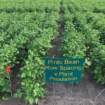 For the past decade, North Dakota State University has conducted field research on bean yields versus plant population and row size.