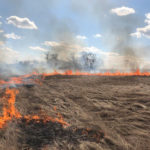 Ellis Seeds burns an unharvested flax field near Wawanesa this spring after quality samples deemed it not worth harvesting.